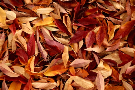 Fall Leaf Haul: The City of Salem and Marion County Public Works will take your residential leaves, grass clippings, and tree limbs for free, 9 a.m. to 3 p.m. Nov. 17, Brown's Island Demolition Landfill, 2895 Faragate St. S, Salem. Free. 503-589-2195, 503-588-6317 or www.cityofsalem.net/Pages/fall-leaf-haul.aspx.