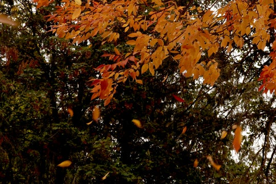 Leaves change color and fall in Salem on Sunday, Sept. 30, 2018.