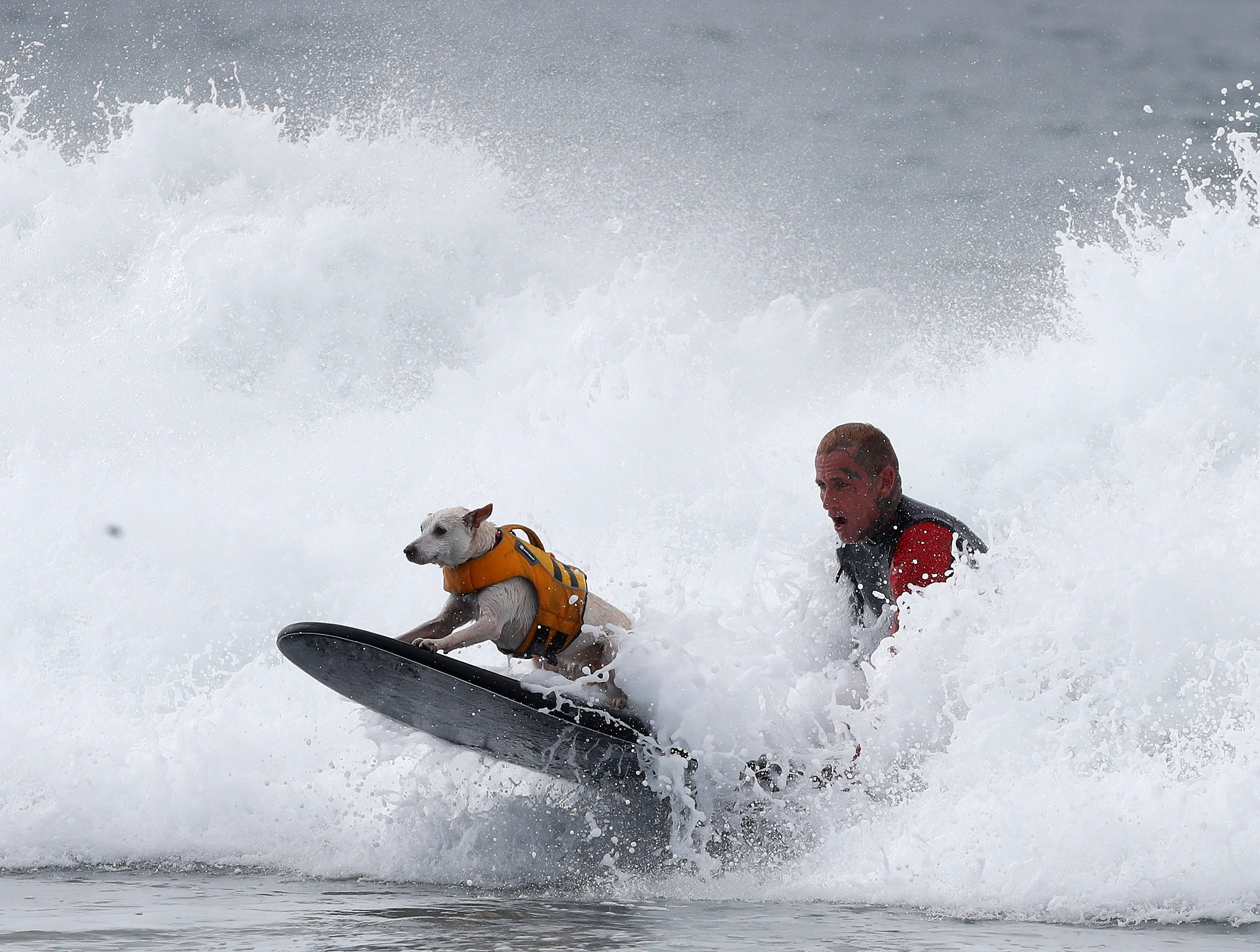 A surfer and his dog ride choppy surf.