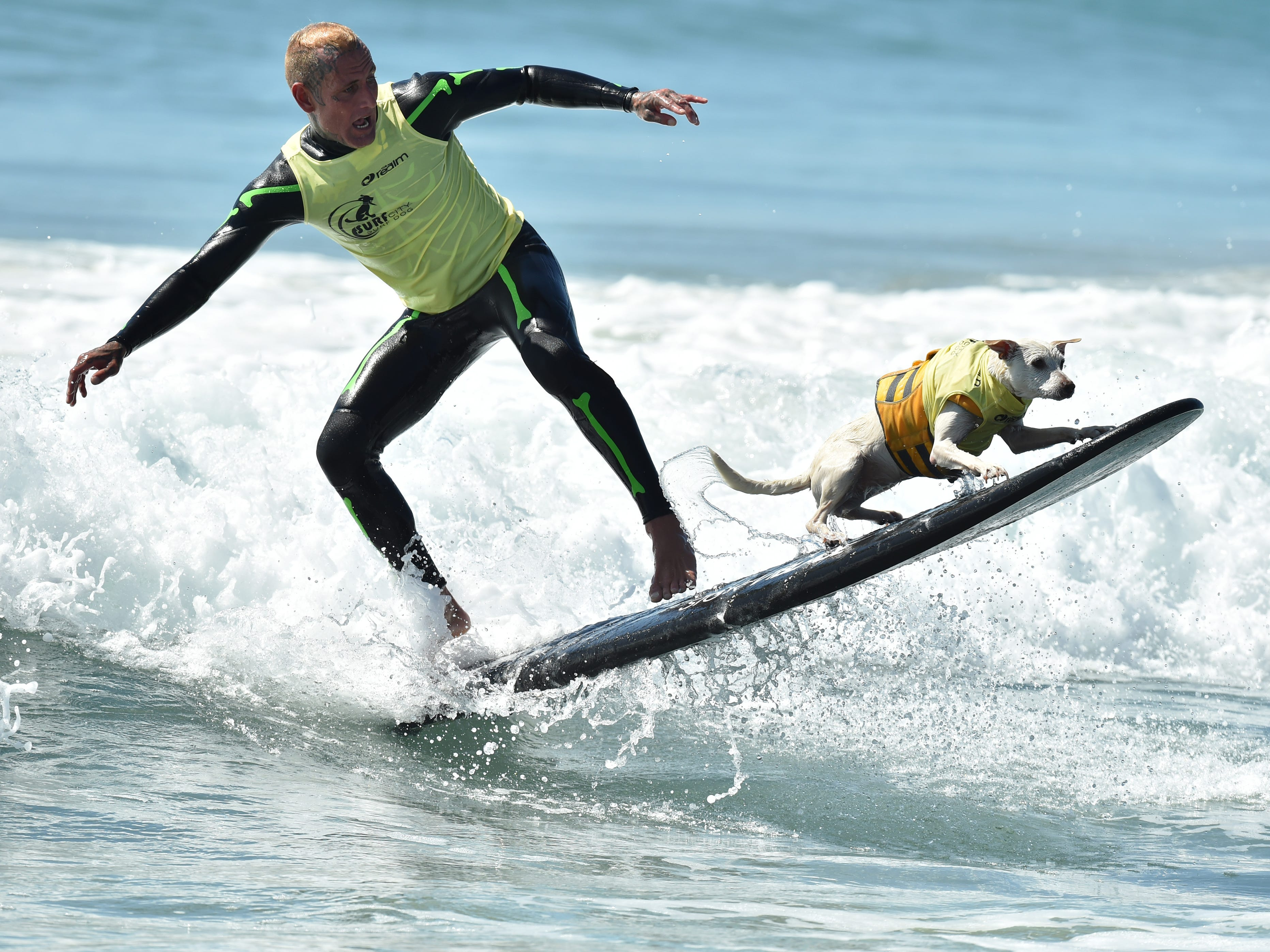 Sugar the Surfing Dog and Ryan Rustan compete in the 10th Annual Surf City Surf Dog competition on Sept. 29, 2018 in Huntington Beach, Calif.