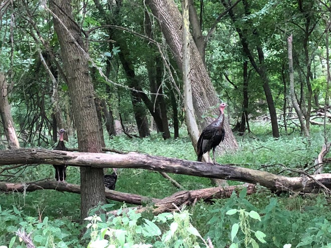 You never know what you'll see walking along the trails of Palmyra Nature Cove.