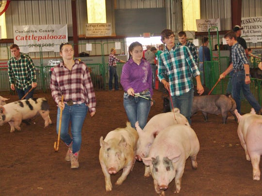 Hog exhibitors showcase their handling skills in the 17-year-old class on Sunday during the Jr. Fair Hog Show in Hunter Arena.