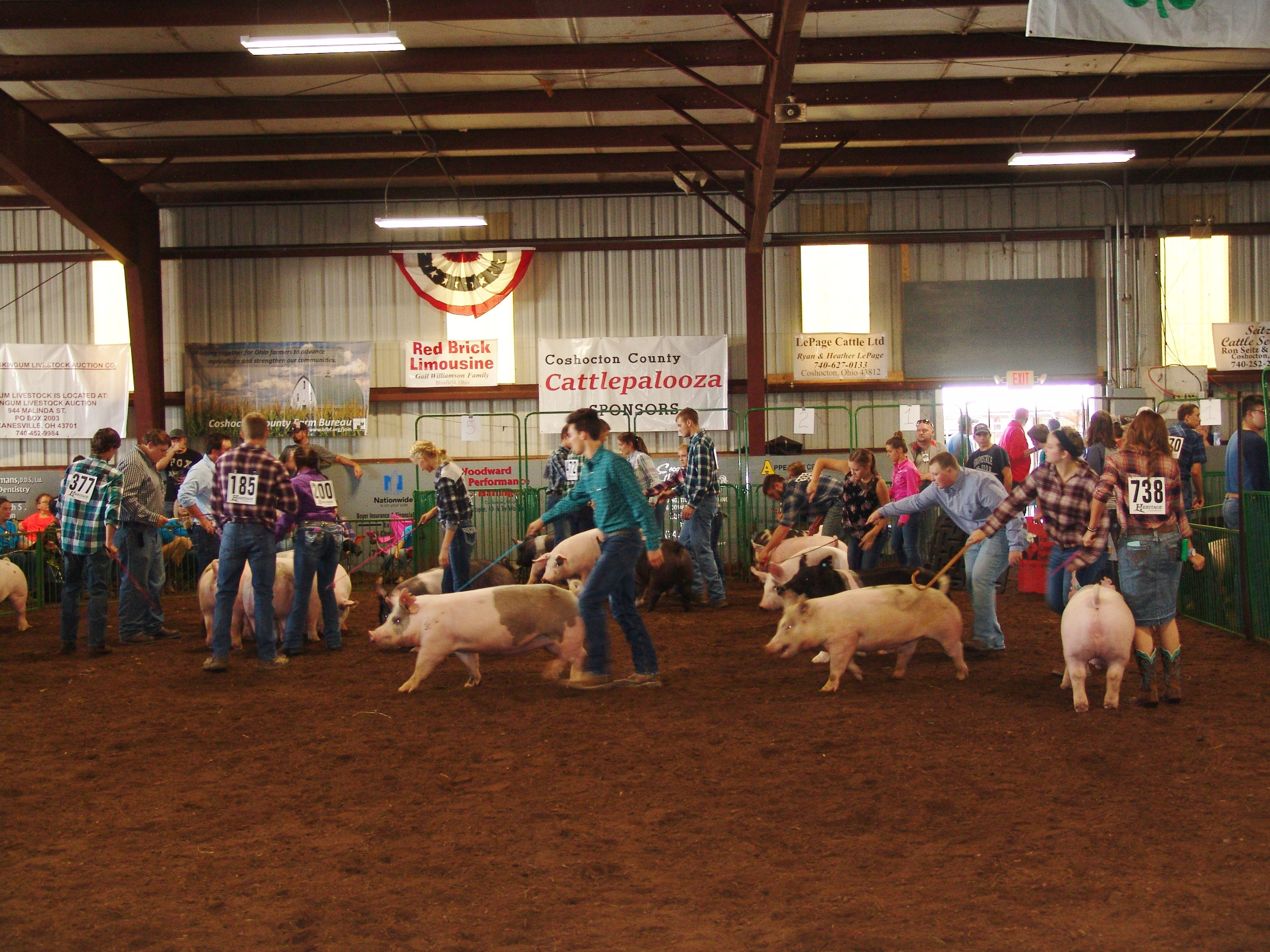 Hog exhibitors showcase their handling skills in the 17 year old class on Sunday during the Jr. Fair Hog Show in Hunter Arena.