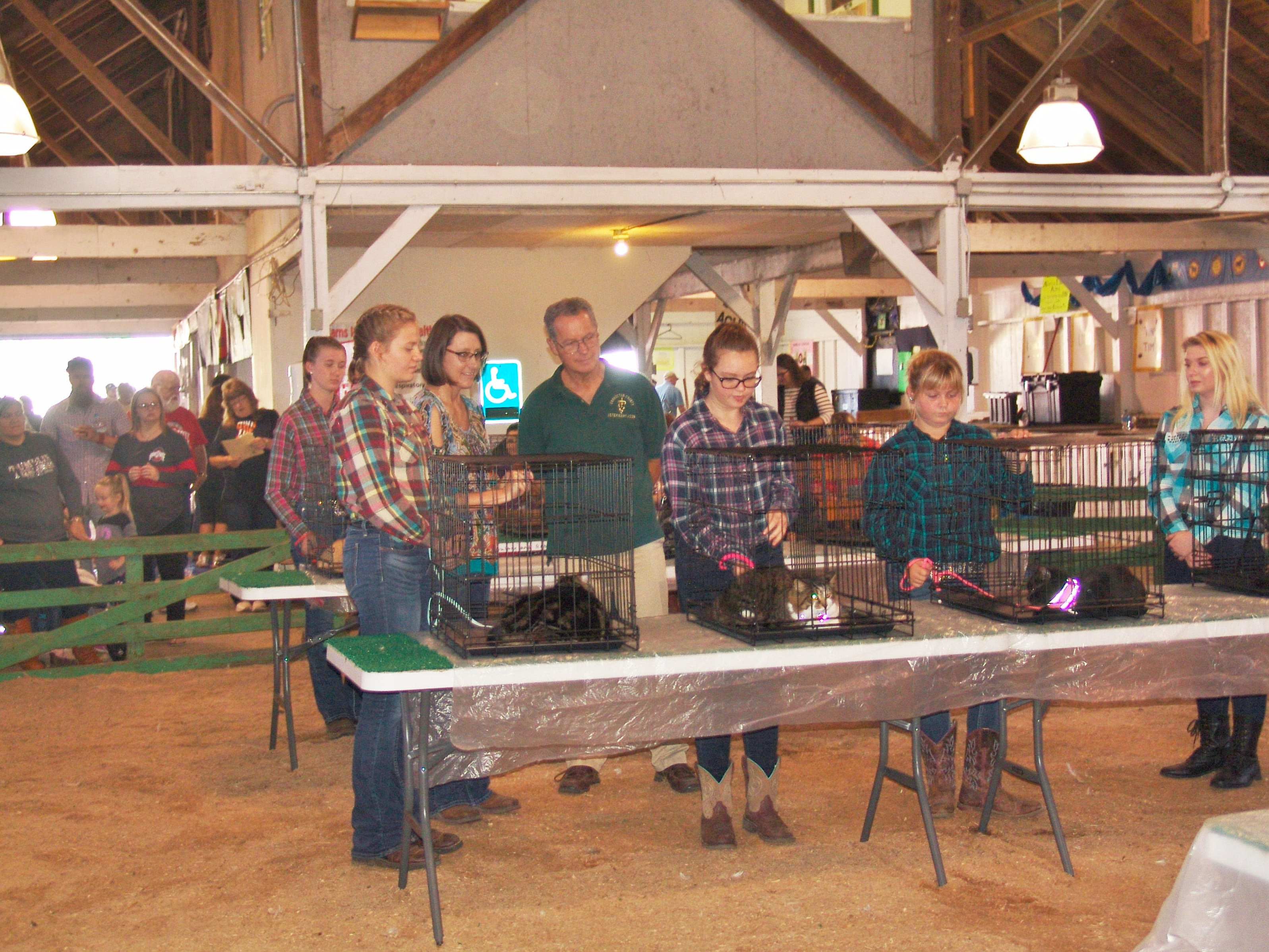 Judges look over the cats during the cat show on Sunday at the fair in the Jr. Fair Arena.