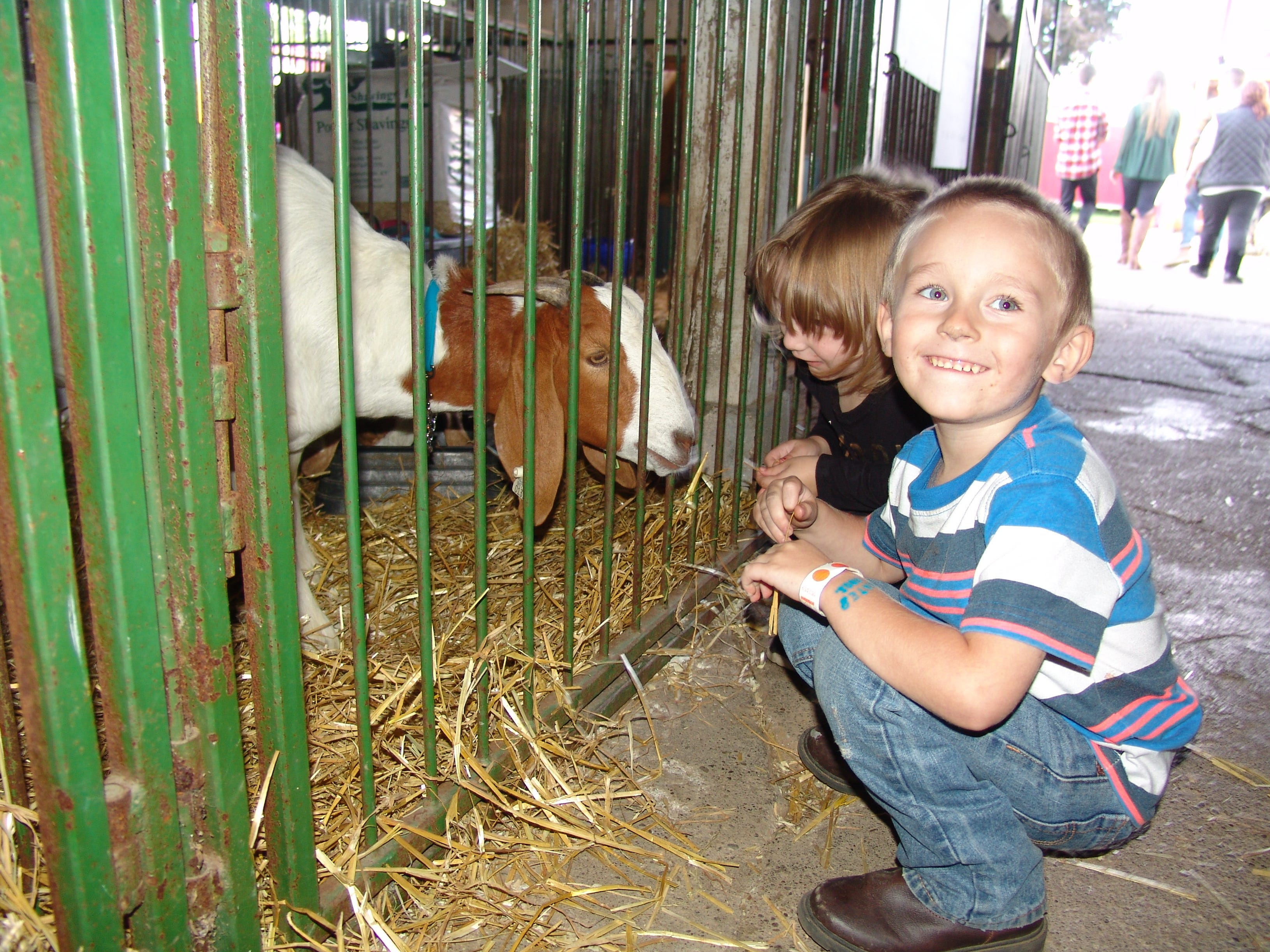 Cousins Trevor Mumaw and Adeline Waddell of Zanesville feed straw to goats in the goat barn Saturday at the Coshocton County Fair.