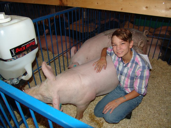 Austin Dovenbarger poses with his and his brother's hogs in the hog barn on Sunday at the Coshocton County Fair.