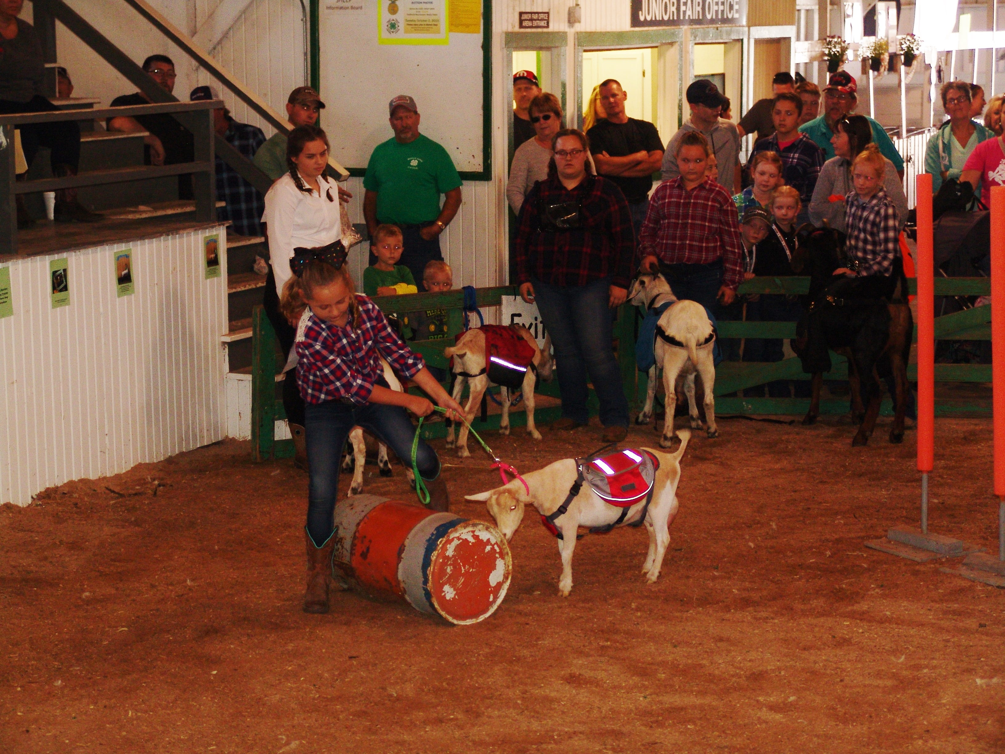 Isabella Crider in the ring with her goat Abilene during the Jr. Fair Goat Show.