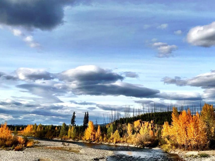 Fall colors along the North Fork of the Flathead River in Glacier National Park