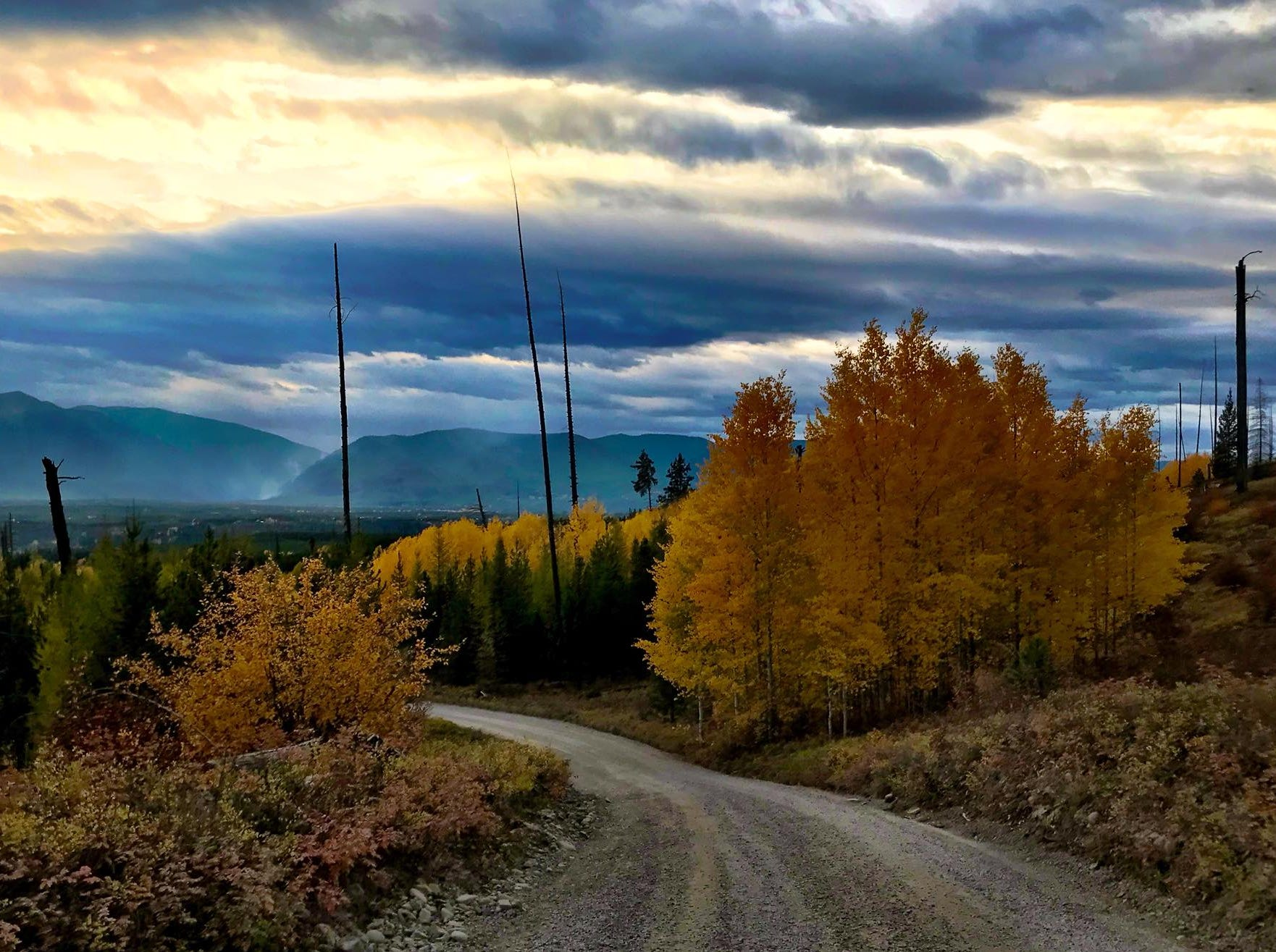 Fall colors along the road to Bowman Lake in Glacier National Park