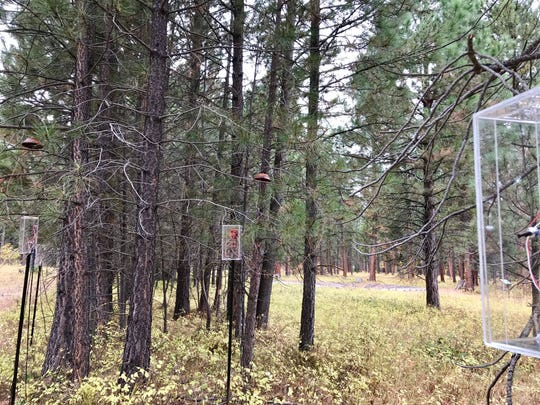 """The creak and buzz of trees are recorded and amplified in """"Tree Talk,"""" a new instillation by Anne Yoncha, the Blackfoot Pathways: Sculpture in the Wild/University of Montana emerging artist."""
