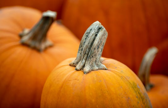 October Kicks Off With Pumpkins