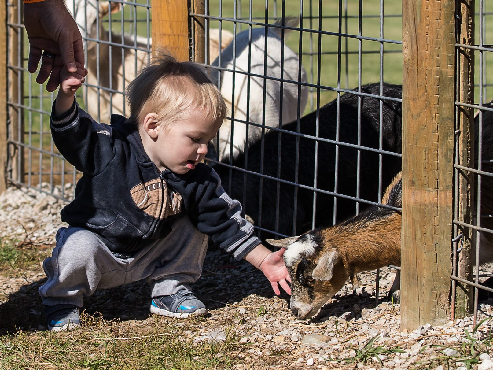 One-year-old Isaac Scheuers of West Bend pets a baby goat during Pumpkin Fest at Basse's Taste of Country in Colgate on Saturday, Sept. 29, 2018. The annual event features a variety of fun fall activities for the whole family. Visit bassesfarms.com for more info.