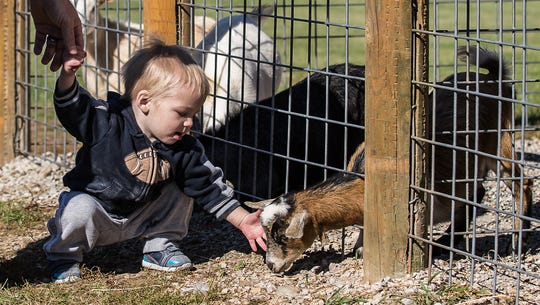 One-year-old Isaac Scheuers of West Bend pets a baby goat during Pumpkin Fest at Basse's Taste of Country in Colgate on Saturday, Sept. 29, 2018. The annual event features a variety of fun fall activities for the whole family.