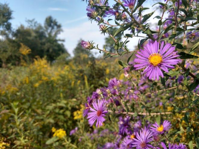 Dutro-Ernst Woods is a 33-acre nature preserve located along Kilgore Avenue between Muncie and Yorktown.