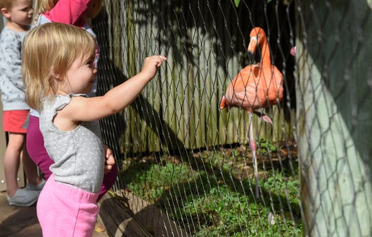 Joelle Frank, 2, points at the flamingos at the Nashville Zoo during a visit on Friday, Sept. 28, 2018.