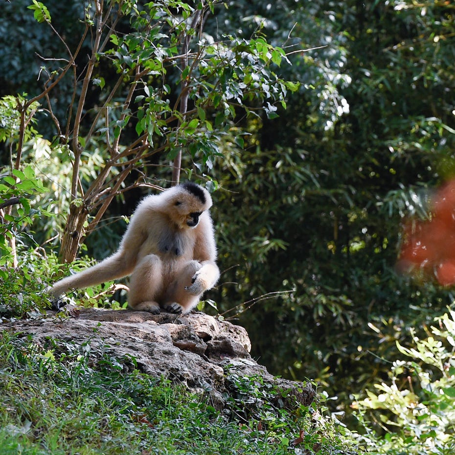 Nashville Zoo: 6 routes to hit the highlights your group will enjoy