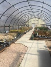 One of the State Forestry greenhouses show the variety available.