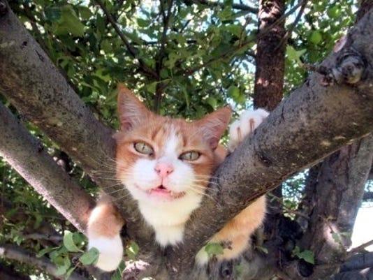 Wilcox Between Branches