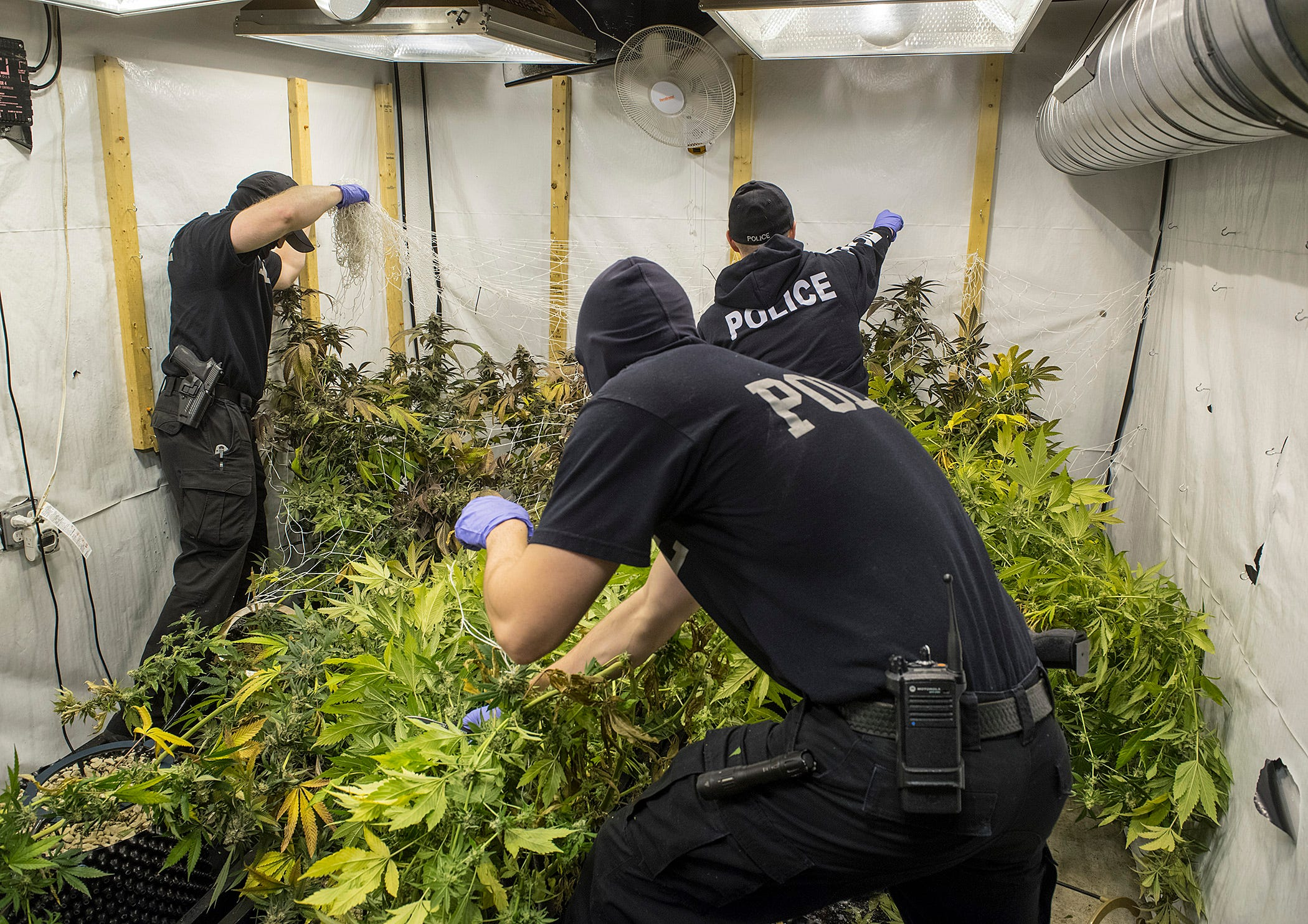Police raid uncovers dozens of pot plants, grow operation in Livonia
