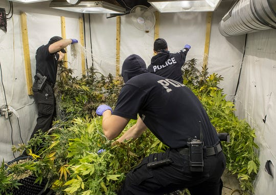 Officers dismantle the marijuana-growing operation.