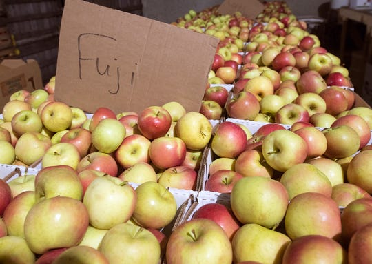 Fresh market-valued Fuji apples are preserved in cold storage at about 40 degrees waiting for their moment in the farm market at Brown's Orchards in Loganville. Fresh market apples are apples that have not succumb to bruises, cracking, splitting, mold or rot.