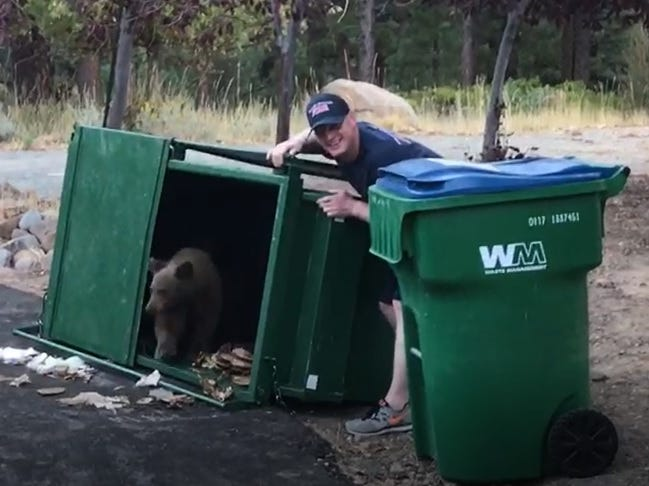 Watch: Baby bears escape garbage bin south of Reno