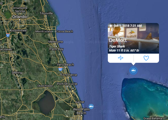 Tiger shark DeMott pings east of Fort Pierce Oct. 1, 2018.