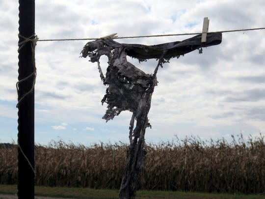 In this Monday, Sept. 24, 2018 photo, a pair of tattered cotton briefs hangs on a makeshift clothesline during a field day on strip till and soil health in Easton, Minn. The Faribault County Soil Health Team challenged farmers in the area to bury underwear in their fields in July to see how well they decomposed. While not a scientific test of soil health, some farmers were happy to see their conservation practices are working.