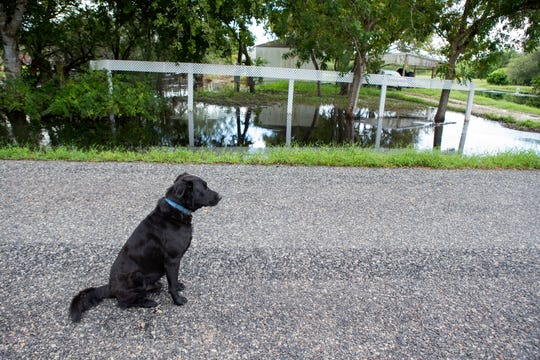 """Gus De La Pena's dog Blacky sits outside a waterlogged home in the Tierra Grande colonia on Monday, October 1, 2018 from recent rains. Tierra Grande is located on the edges of Corpus Christi and Bishop in Nueces County. """"The water has nowhere to run,"""" said Lionel Lopez, founder of South Texas Colonia Initiative. """"The sun is the drainage here, it has to evaporate. The water is not going to run anywhere. The water is standing still."""""""