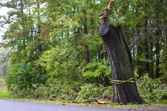 Remnants of the tree on Webb Road in DeWitt Township that fell onto a man driving his car Monday morning, Oct. 1, 2018, killing him.