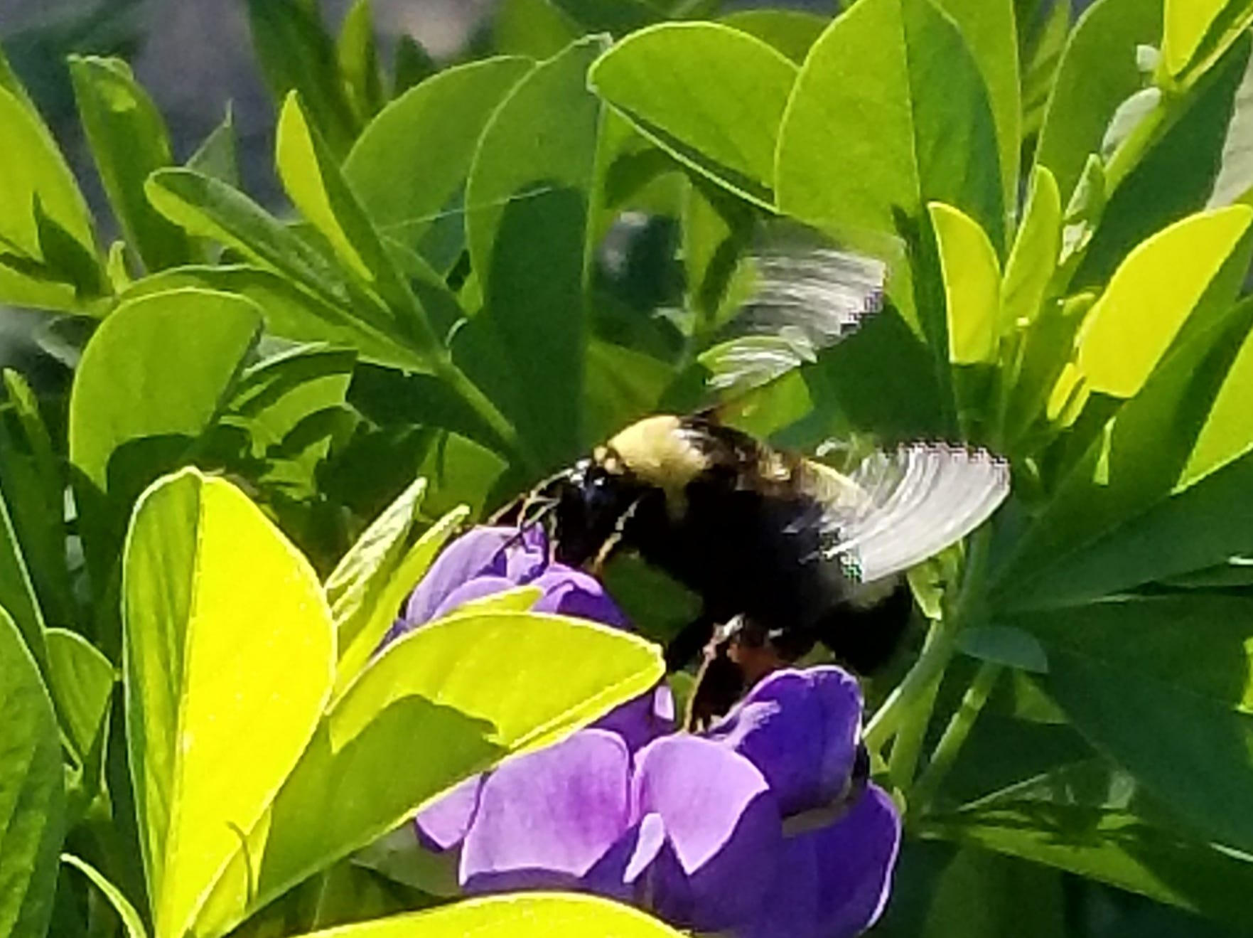 """Susan Fannon of Bonita Springs sasys, """"buzz by sometime."""""""