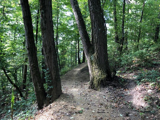 Mountain bikers will be able to navigate obstacles like this narrow tree pass when Tannery Knobs mountain bike park opens in Johnson City this fall.
