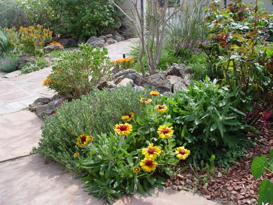 A one-gallon blanketflower planted in fall will become a focal point soon enough.