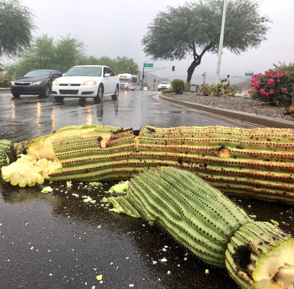 Lluvias provocadas por huracán Rosa azotan Arizona
