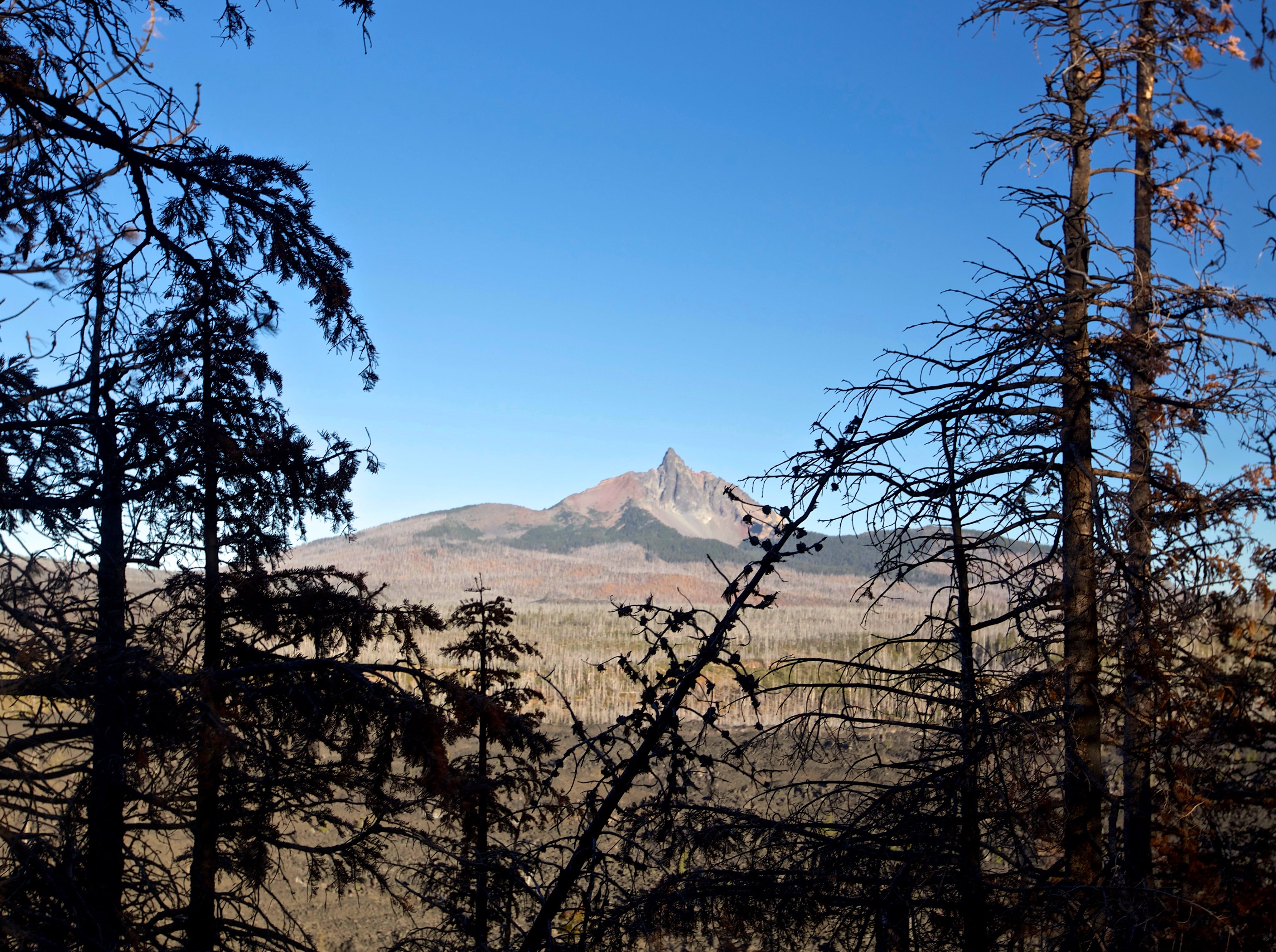 Views of Mount Washington from burned forest on Black Crater Trail on McKenzie Pass west of Sisters.