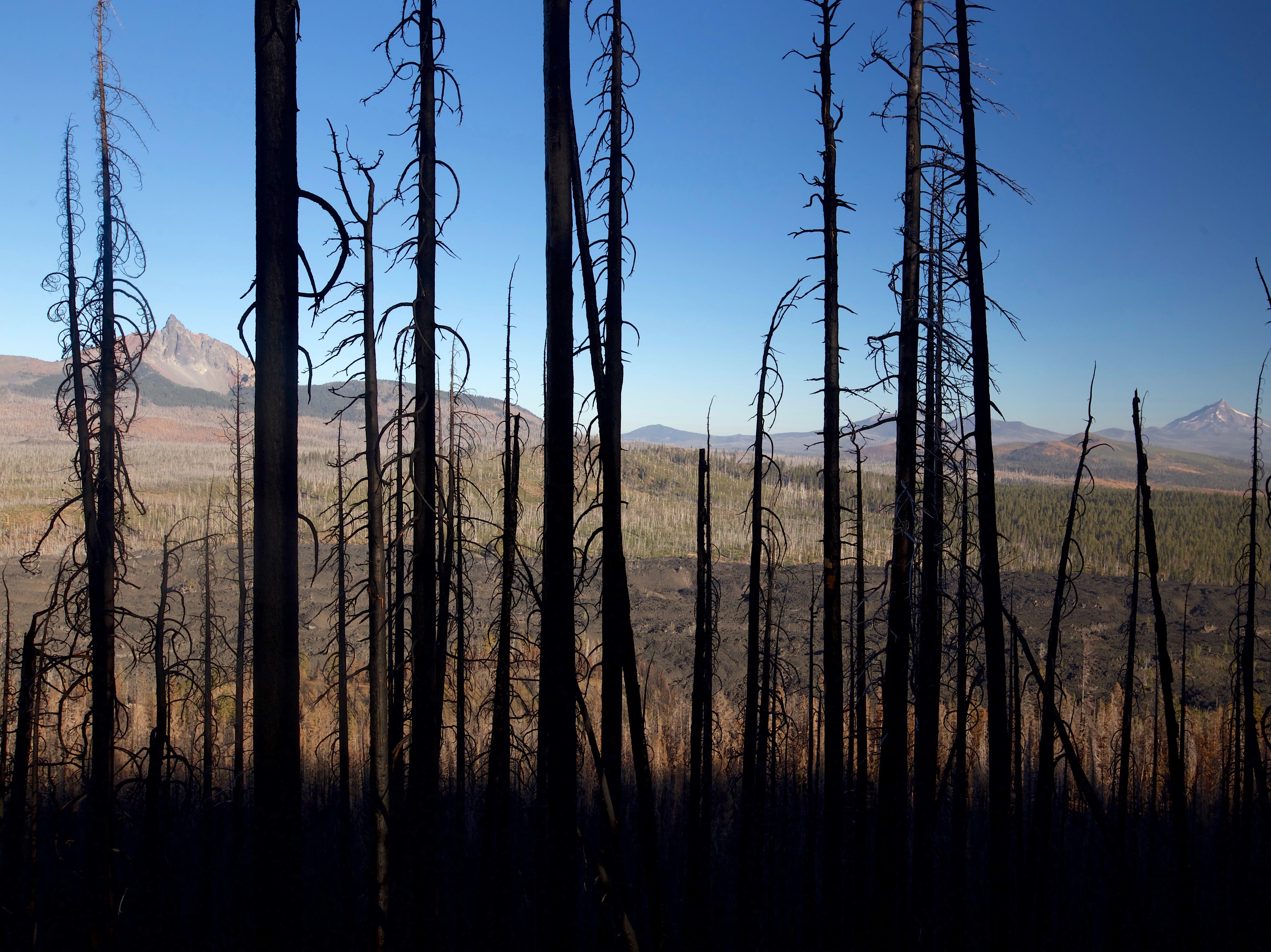 Views of Mount Washington and Mount Jefferson from burned forest on Black Crater Trail west of Sisters.