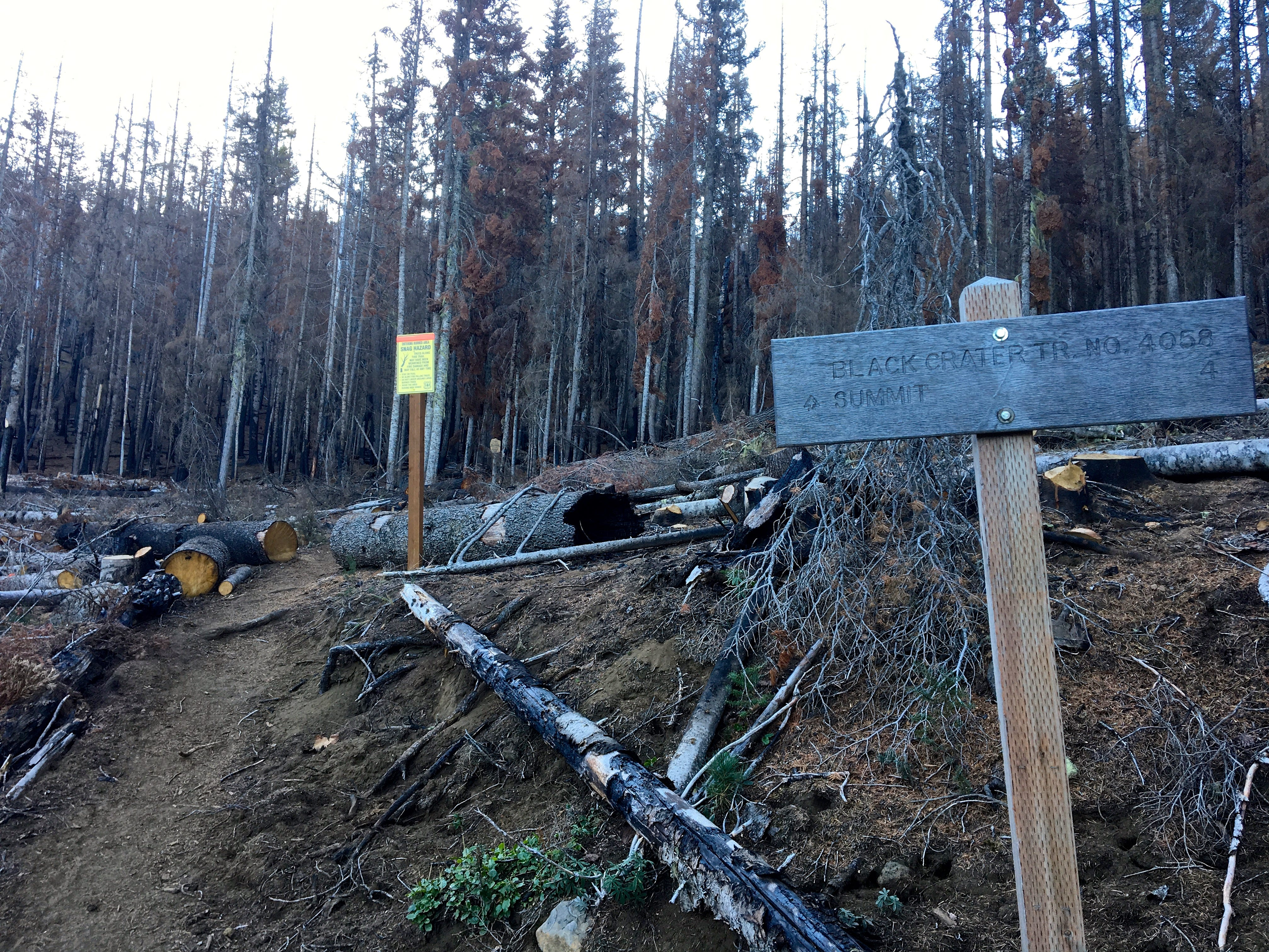 Trailhead of Black Crater Trail west of Sisters following damage from Milli Fire.
