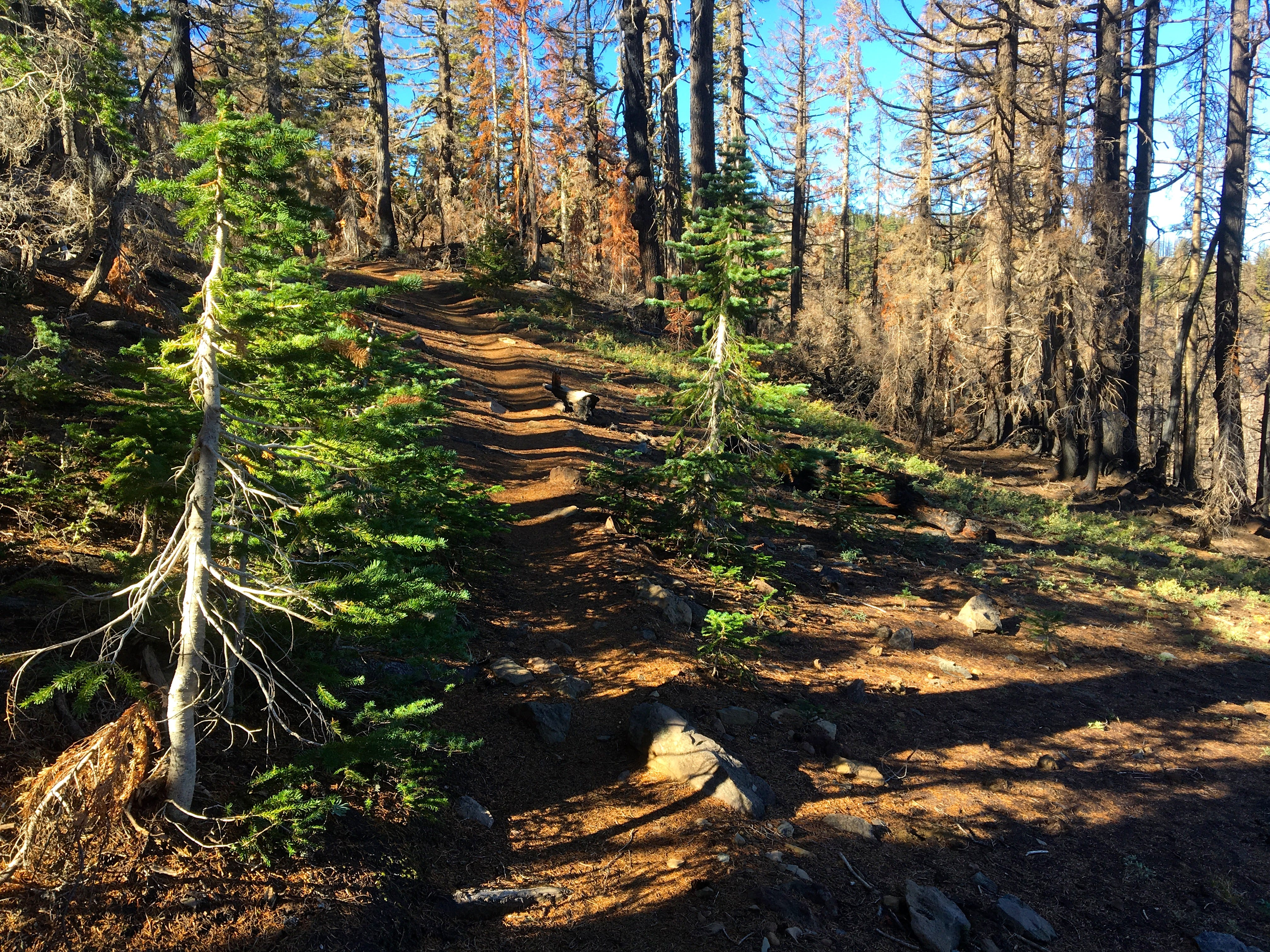 Black Crater Trail enters the Three Sisters Wilderness where it was burned by the 2017 Milli Fire.