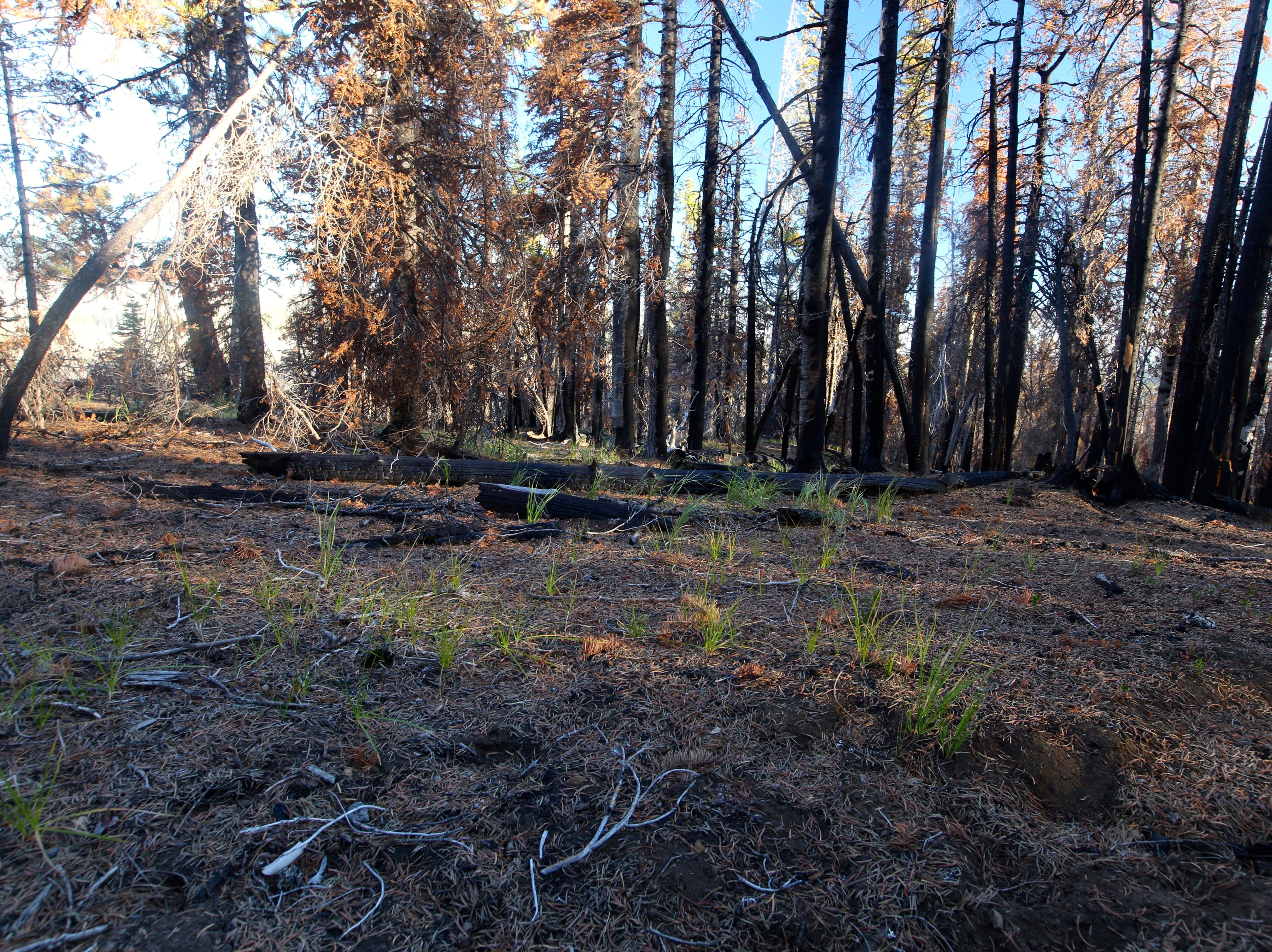 Burned forest on Black Crater Trail.