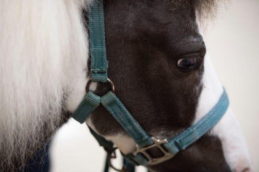 Tcn 1003 Sa Therapy Horses
