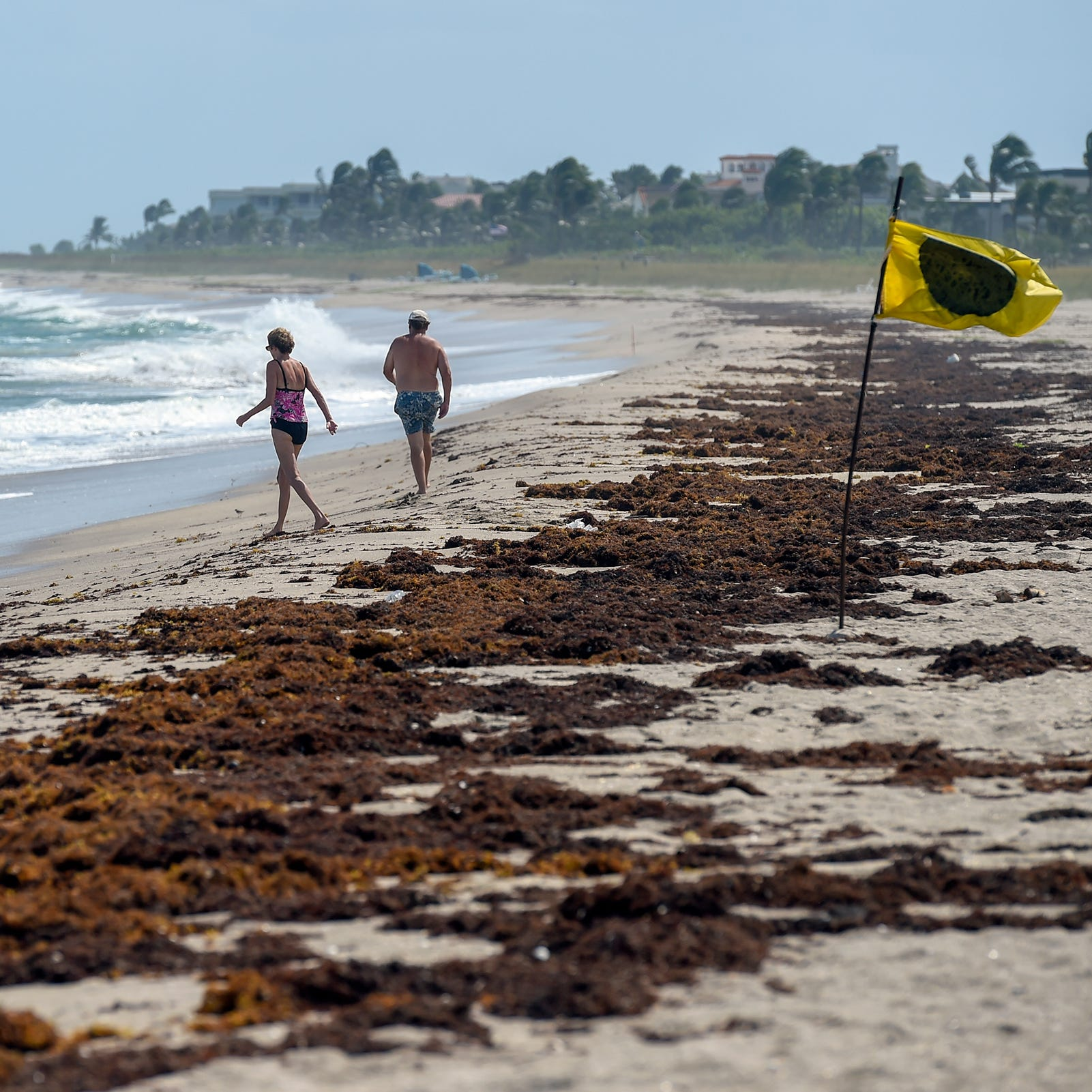 Facing Florida's public health crisis caused by toxic algae