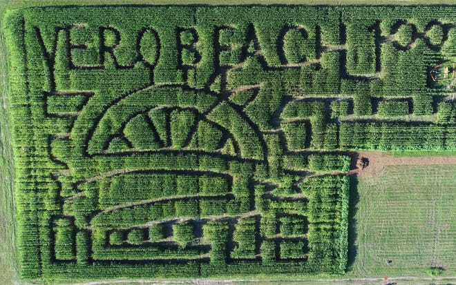 The theme of this year's corn maze at Countryside Citrus is the centennial of Vero Beach.
