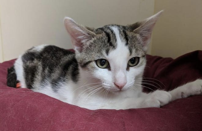 Abigail was a stray now at the Delaware SPCA.