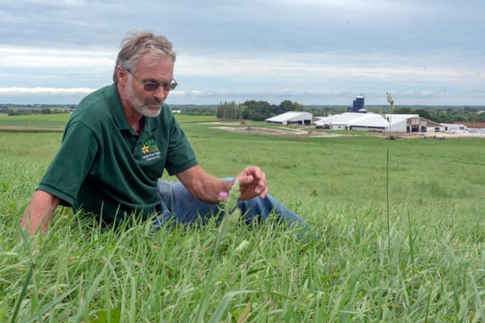 David Geiser, of New Holstein, checks the growth of a perennial forage stand with the Gold Star farmstead buildings in the background. Geiser was the 2018 Leopold Conservation Award winner.