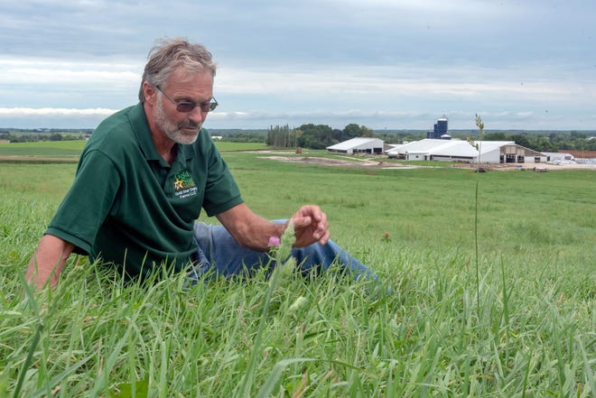 David Geiser checks the growth of a perennial forage stand with the Gold Star farmstead buildings in the background.