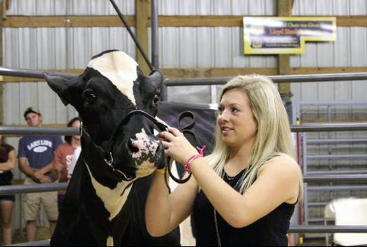 Wsf 1005 Vernon Fair Cow