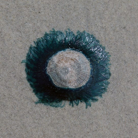 A blue button that was found on the Brigantine beach on September 25.