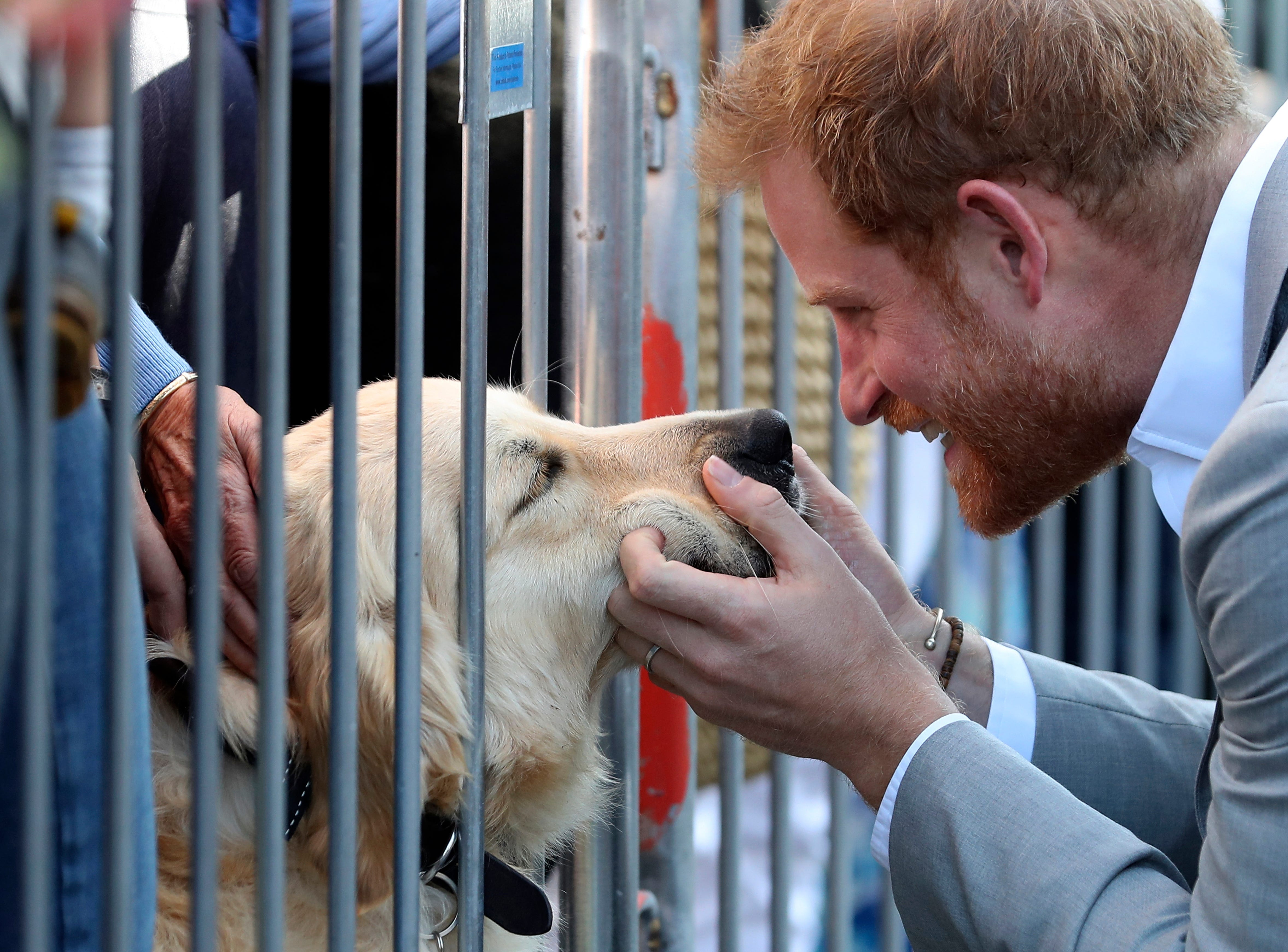 Britain's Prince Harry pets a dog as he  and Meghan, the Duchess of Sussex visit Chichester, south east England, Wednesday Oct. 3, 2018.