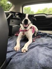 Bandi adores car rides.