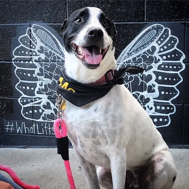 Bandi is a 3-year-old terrier / border collie mix who loves being around people. She wags, she wiggles, she hugs.